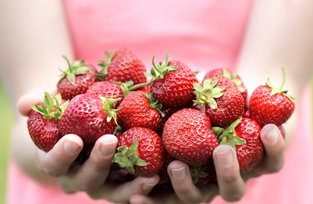 freshly picked: Freshly Picked Strawberries