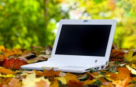 White Laptop in an automn scene Stock Photo - 18633066