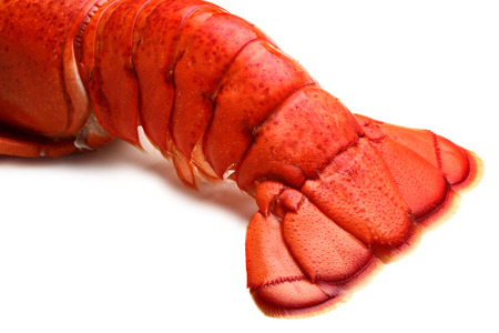 lobster tail:  Lobster tail on white background