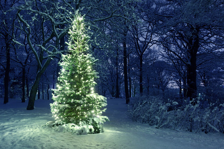 noche: Árbol de Navidad en la nieve