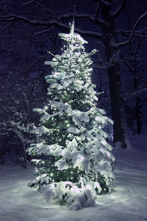 snow tree: Christmas Tree in Snow