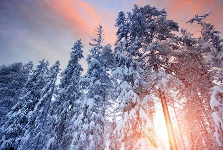 wonderful winter landscape