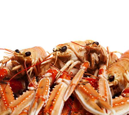 Crayfish Banque d'images