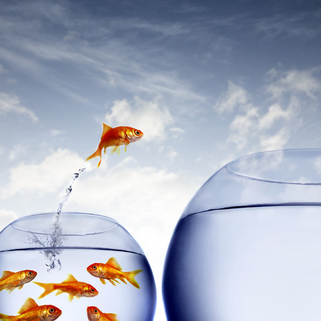 leap: goldfish jumping out of the water from a crowded bowl