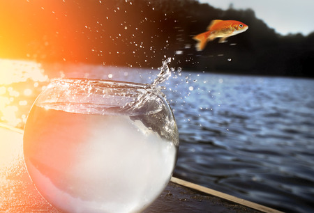 goldfish jumping out of the water Stok Fotoğraf - 38964586