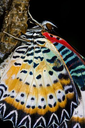 Cocons de papillon et le papillon nouvellement éclos Banque d'images - 49674571