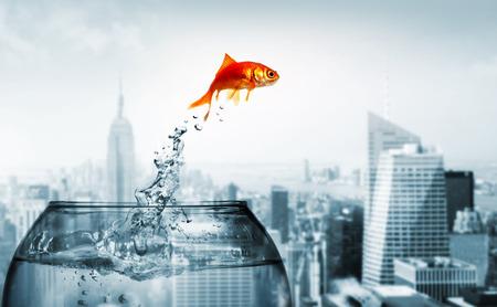 Goldfish sautant hors de l'eau Banque d'images - 49674572