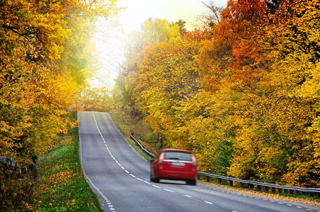Car on the road in the fores Stock Photo