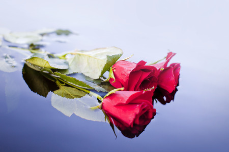 Roses on the water Banque d'images