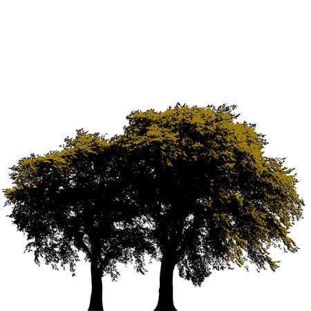 stately: Two stately trees isolated against a white background Illustration
