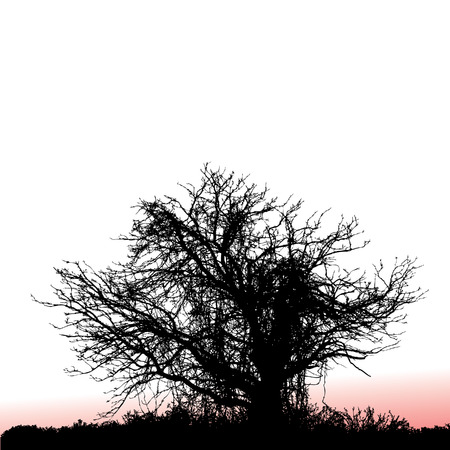 wood cut: A scary, gnarly tree seen at sunset with space for text