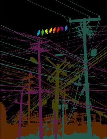 contador electrico: Un arco iris de las aves en un hilo Vectores