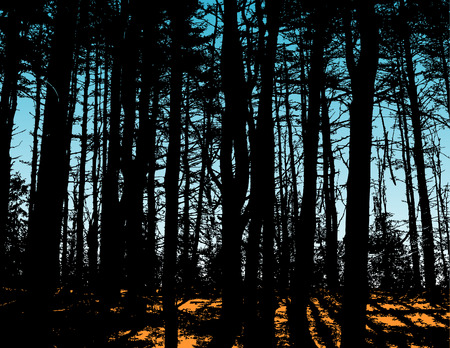 bach: Sonnenschein durch den Wald