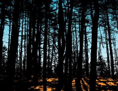 brook: Sunshine through the forest