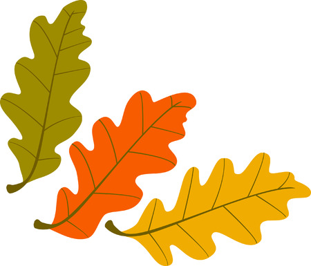 macro leaf: Three vector autumn oak leaves in three different colors Illustration
