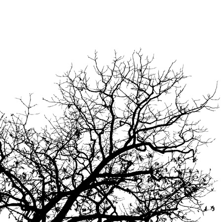 balck: A high contrast bare tree in balck and white