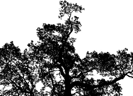 A black, barren tree isolated on white background.