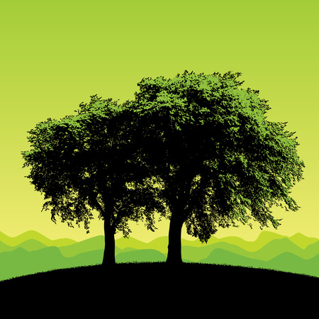 Two stately trees isolated against a white background Vector