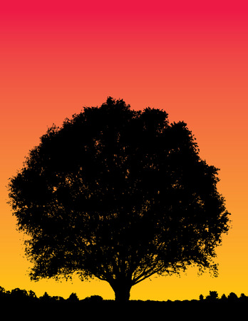 orange sunset: Illustration of a silhouetted tree on red and orange sunset sky background.