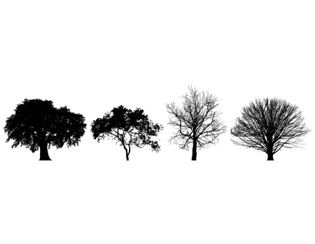 four objects: Four black and white trees