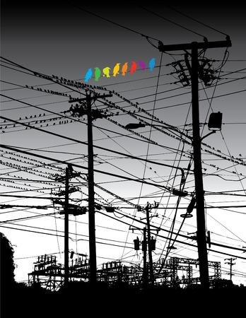 Un arc-en-ciel d'oiseaux sur un fil