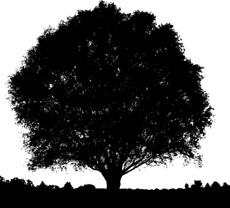 A lone, beautiful tree in a field in black and white Vector