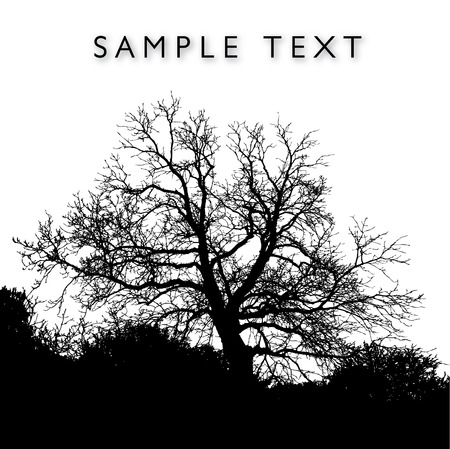 magnificent: A magnificent vector tree with background space for text