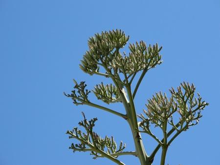 yucca: Yucca