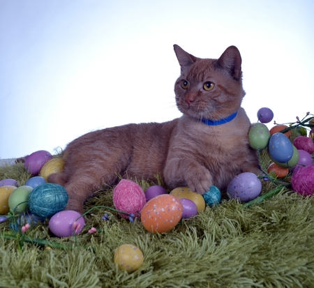 Photograph of a cat waiting for Easter  photo