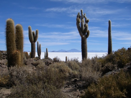 An island of rocks, shrubs, petrified corals and cacti in the middle of a