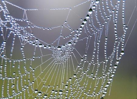 dew: spider web