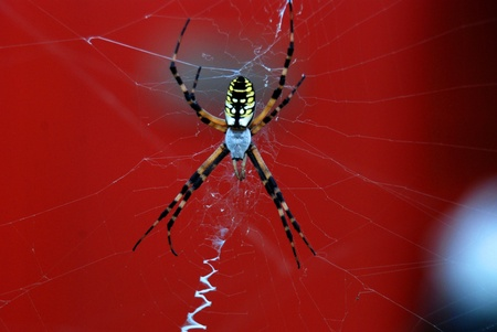 scarry: Spider and web