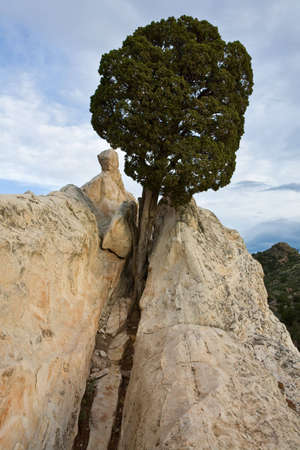 Tree On White Rock in de tuin van de goden.  Stockfoto