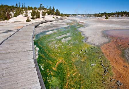 Green cyanidium algae creates a colorful mat at Porcelain Basin in Yellowstone.