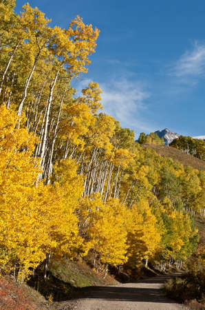 Autumn aspens along county road  7 near Ouray, Colorado photo