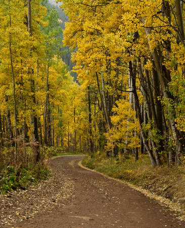 Fall aspens along Ophir Pass Road near Telluride, Colorado photo