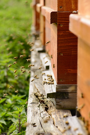 noun: Hives with bees at the hive entrance