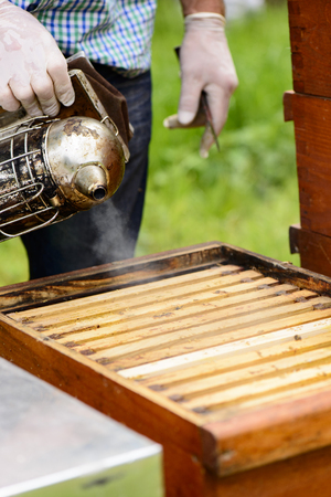 stockpiling: Beekeepers blowing smoke from the smoker on the honeycomb frame Stock Photo