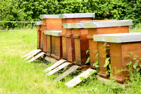 stockpiling: Beehives with bees on meadow