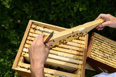 Looking over the beekeepers shoulder Stock Photo