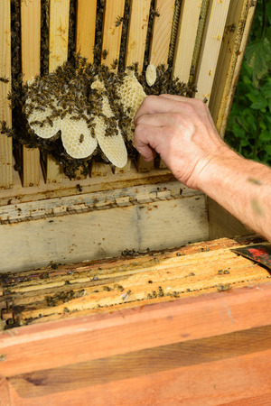 industriousness: Illegal building in the hive Stock Photo