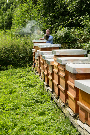 industriousness: beekeeper with beehives