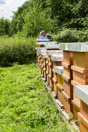 apis: beekeeper with beehives