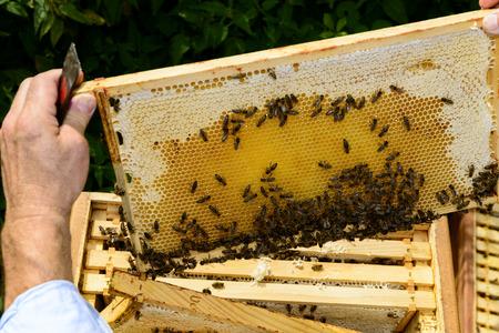 looking over: Looking over the beekeepers shoulder Stock Photo