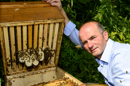mellifera: Illegal building in the hive Stock Photo