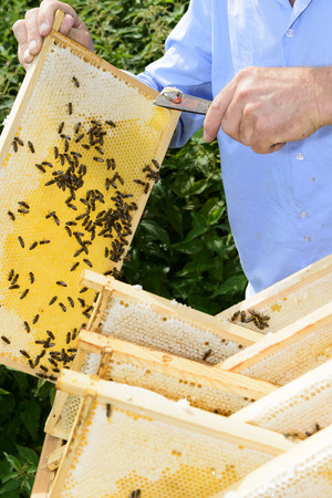 industriousness: fresh honey from the beehive Stock Photo