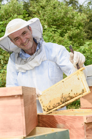 mellifera: beekeeper at work with honeycomb frame