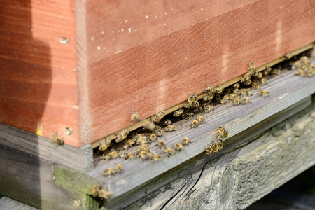 industriousness: View of the entrance hole of a beehive