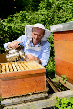 beekeeper at work with smoker