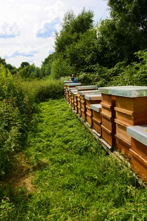 beekeeper: beekeeper with beehives